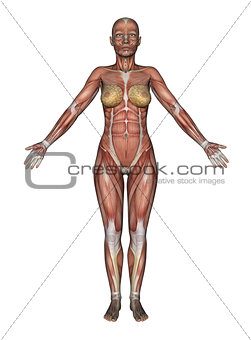 3D female figure with smooth skin standing