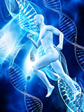 3D male figure on medical DNA background