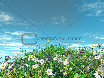 3D daisies in grass
