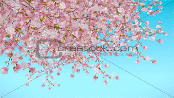 Painted cherry blossom on blue background