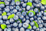 Background from  blueberries
