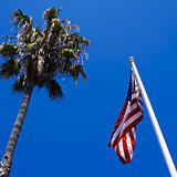 Low Angle Photo of an American Flag and Palm Tree on Summer Day