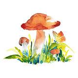 watercolor illustration of mushrooms