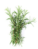 Fresh garden herbs. Rosemary