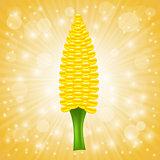 Fresh Cob Corn