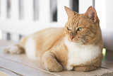 Ginger cat laying on bench