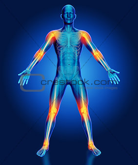 3D male medical figure with joints highlighted