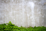 Gray wall and grass