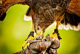 Eating raptor bild