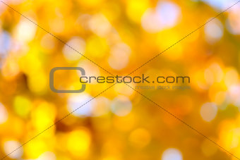Autumn abstract, fall season background with a magic lights