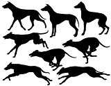 Greyhound dog silhouettes