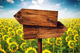 Blank Rustic Opposite Direction Wooden Sign in Sunflower Field