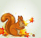 Squirrel and maple leaves