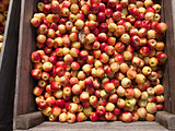 Organic apples container