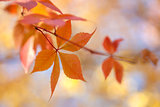 Colorful Autumn leaves background with bokeh lights -  fall