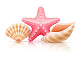 Set of summer sea shells and starfish