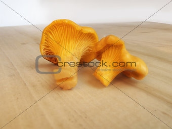 Chanterelle mushrooms on the wooden table