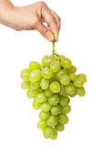 Hand holding a bunch of grapes