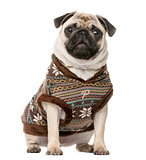 Dressed Pug sitting in front of a white background
