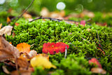 Natural autumn background - rock with bright green moss. Vyborg,