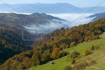 autumn landscape with mist