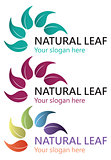 Natural leaf logo design