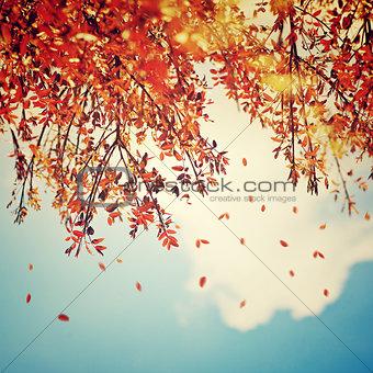 Beautiful vintage autumn background