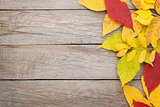 Colorful autumn leaves on woden background