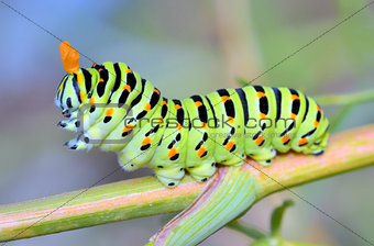 A close up of the caterpillar