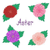 Cute aster set, colorful flowers collection of daisy
