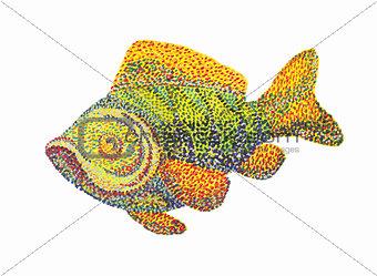 Fish on white background.