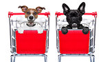 shopping cart dogs