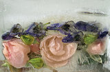 Background of   rosa flower frozen in ice