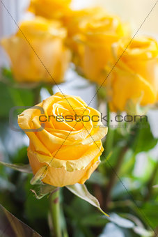 Bouquet of fresh, blossomed yellow roses