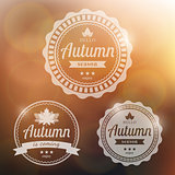 Vector autumn background
