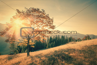 Autumn tree and sunbeam warm day in vintage color