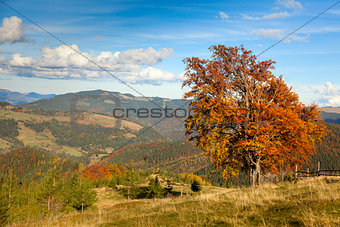 Autumn Landscape with Big Colorful Tree and Mountain Panorama