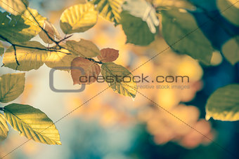 Autumnal leaf vintage background soft focus and color