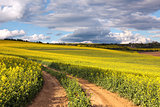 Yellow canola fields and ground road overlooking a valley, rural