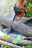 Chainsaw cut wooden logs
