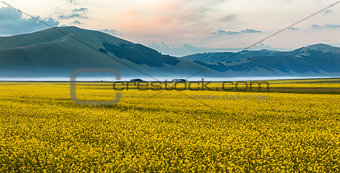 Blooming rapeseed at Piano Grande, Umbria, Italy
