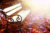 empty bench autumn park