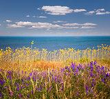 Wildflowers and ocean