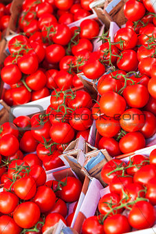 Boxes of Ripe Tomatoes