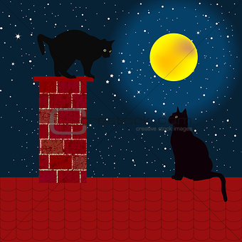 Black cats on the roof