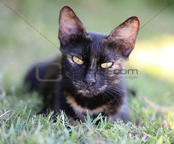 Beautiful cat sitting on the ground