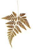 Dry Fern Leaf