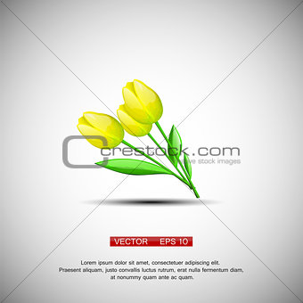 Three vector yellow flowers tulips isolated on a white background