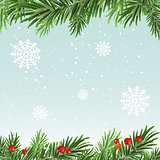 Spruce branches background. Christmas background
