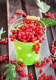 Fresh redcurrant in a bucket